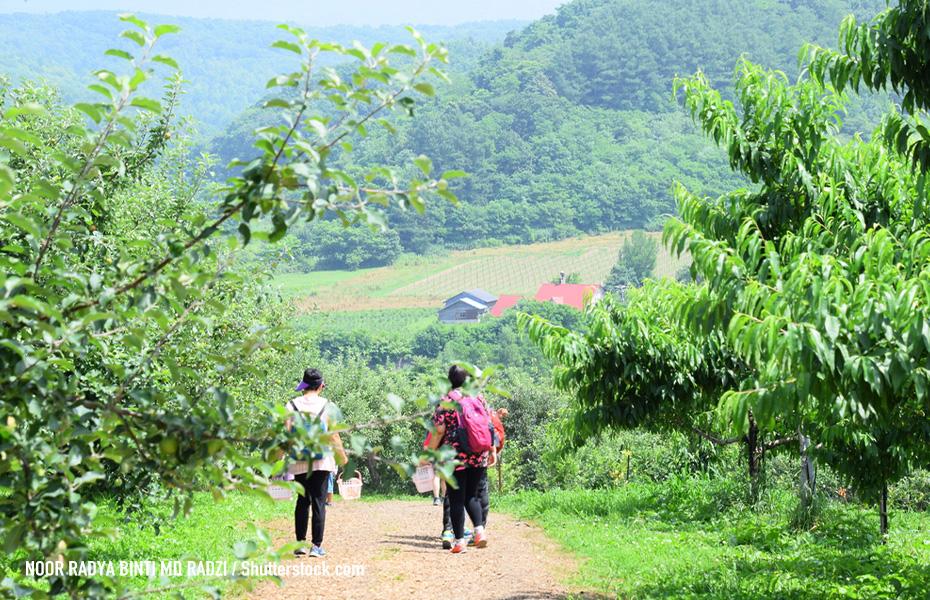 Yamamoto Sightseeing Orchards
